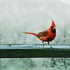 Enjoying The Winter Day by Pat Moore