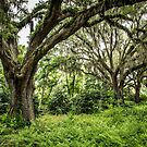 Live Oak with Spanish Moss by eegibson