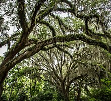 More Live Oak with Spanish Moss by eegibson