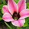 *Avatar-Bulb Flower - Enchanted Flowers*