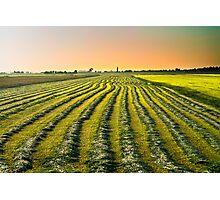 New harvest Photographic Print