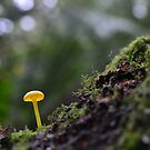 little yellow mushroom by Glenda Williams