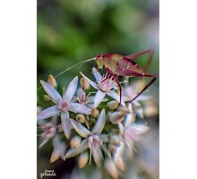 Grasshopper on Flowers Photographic Print