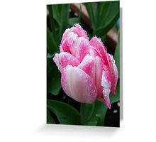 Two Tone Pink Tulip Greeting Card