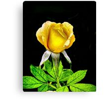 Tropical Sunset Rose Canvas Print