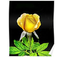 Tropical Sunset Rose Poster