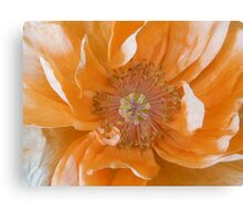 Orange Poppy Fading Canvas Print