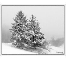 Wintry Duo Photographic Print