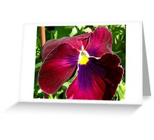 Red Pansy Greeting Card