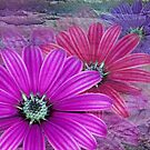 1629-purple flowers by elvira1