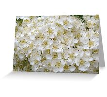Flowering Rowan Greeting Card