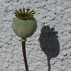 Poppy Seedhead by Jennifer J Watson