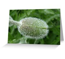 Poppy Bud with Raindrops Greeting Card