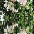 Cherry Blossom Fantasy Arbor by Fay270