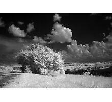 infra 2013 Photographic Print