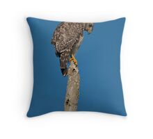 Sharp-shinned Hawk  Throw Pillow