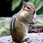A Chipmunk In The Garden by AngieDavies