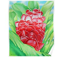 Red Ginger Watercolour Poster