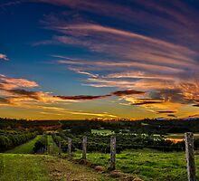 Sunset over Macadamias by DavoSp8