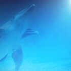 Dolphins swimming towards sunlight in the Florida Keys by Rick Short