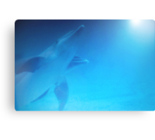 Dolphins swimming towards sunlight in the Florida Keys Canvas Print