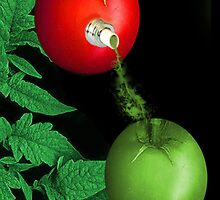 ☝ ☞ TOMATOE SPOUT OF COLOUR☝ ☞ by ✿✿ Bonita ✿✿ ђєℓℓσ