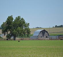 Barn N Tree by RenieRutten