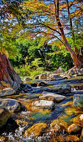 Guadalupe River  by venny