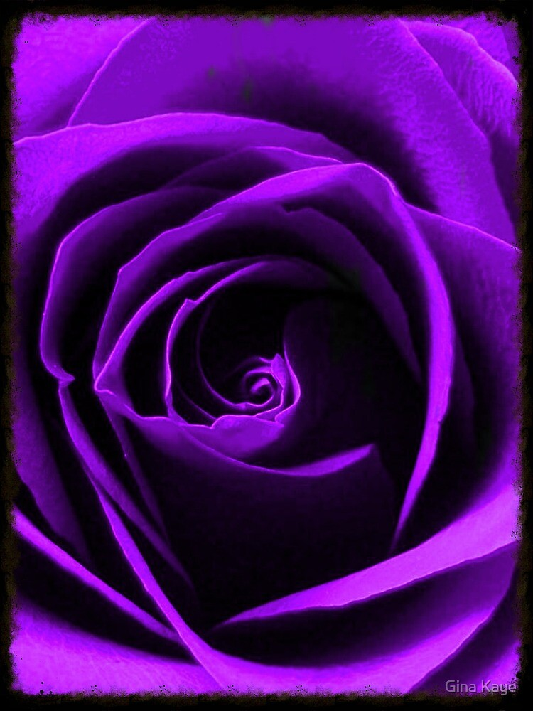 Purple Rose by Gina Kaye