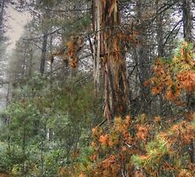 Misty Trail  - Laurel Hill NSW Australia - The HDR Experience by Philip Johnson