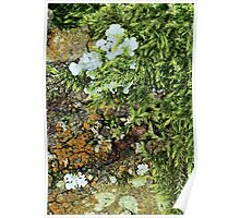 Mosses and Lichens Poster