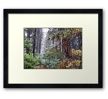 Misty Trail  #2- Laurel Hill NSW Australia - The HDR Experience Framed Print