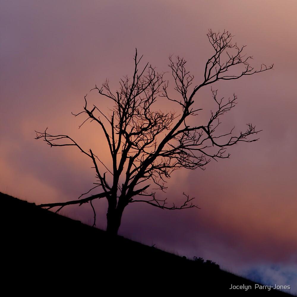 Against the sun by Jocelyn  Parry-Jones