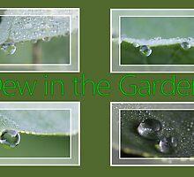 Dew in the Garden by aprilann