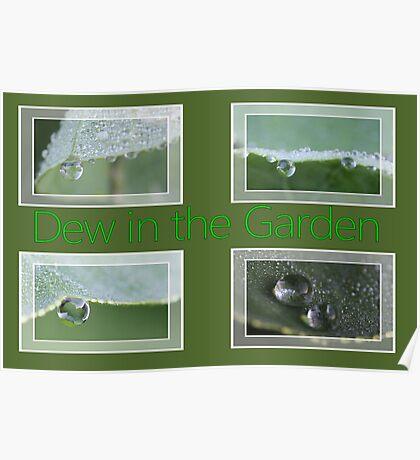 Dew in the Garden Poster