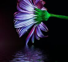 One Petal In by Keri Harrish