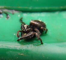 Spider On The Waste Management Can by WildestArt