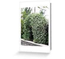 Beautiful Arbor Greeting Card