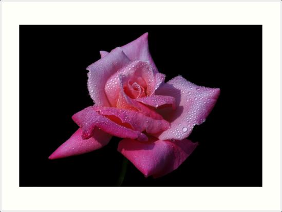 Pink Princess! by Doug Norkum