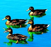 Ducks 3 by joshbshp
