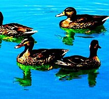 Ducks 1 by joshbshp