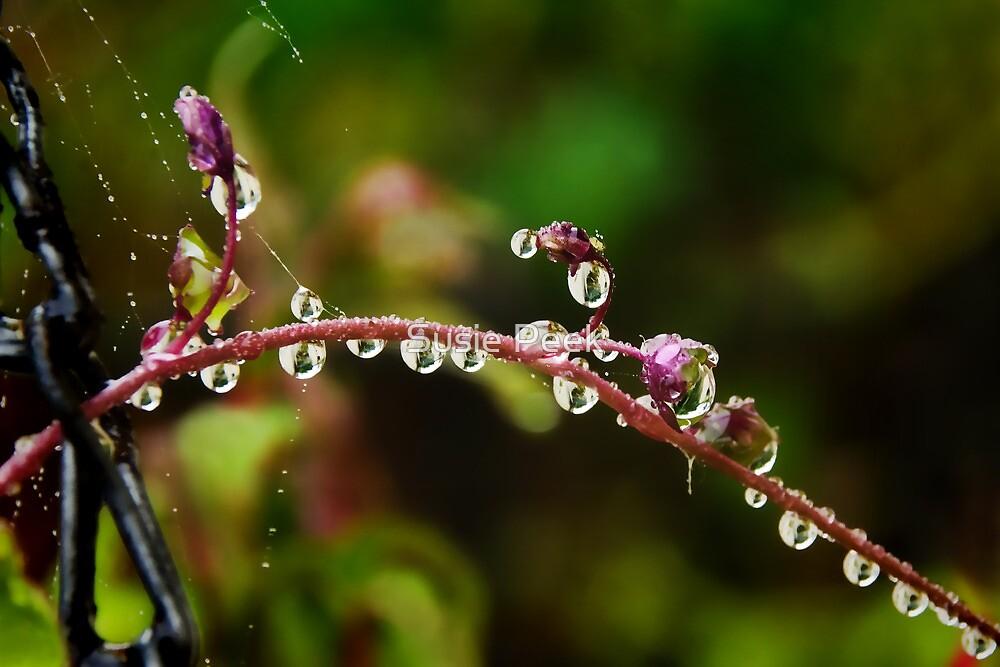 Garden Water-drops  by Susie Peek