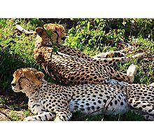 Cheetah - Masai Mara - Kenya Photographic Print