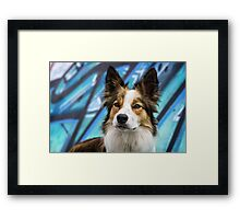Bodhi on Blue Framed Print