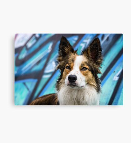 Bodhi on Blue Canvas Print