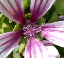 Zebra Mallow Flower Sticker