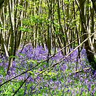 Woodland Carpet by mikebov