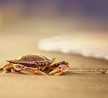 Crab Charybdis by MiVisions