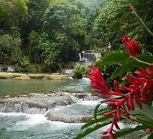 Jamaican Waterfall  by Aimee Wilson