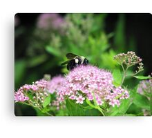 Bumble Bee, Bumble Bee Canvas Print